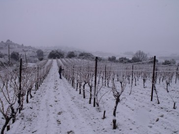 snow day in the vineyards